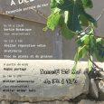 Balade botanique, atelier réparation vélo, atelier fabrication de savon, gratiferia, animation bois géante, repas partagé et troc de plants et […]