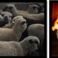L'association Métis'sage organise les 1ères «Rencontres de la laine», un temps d'échange et de rencontre autour de la valorisation de […]