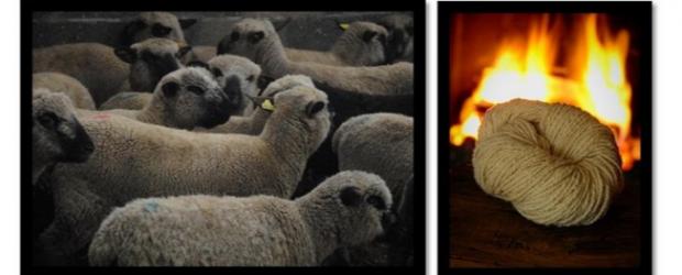 """L'association Métis'sage organise les 1ères """"Rencontres de la laine"""", un temps d'échange et de rencontre autour de la valorisation de […]"""